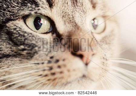 Cute cat close-up portrait. Focus on its magnetic eye. Adorable kitten series.