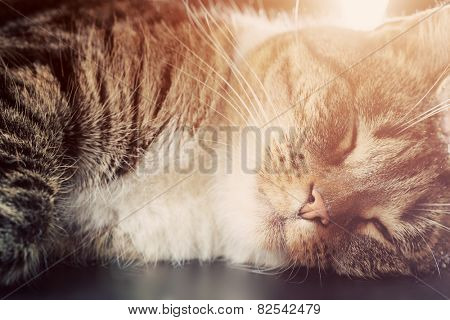 Cute small cat sleeping. Happy expression, light flare. Adorable kitten series.
