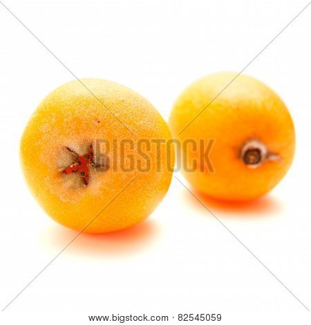Loquat Isolated