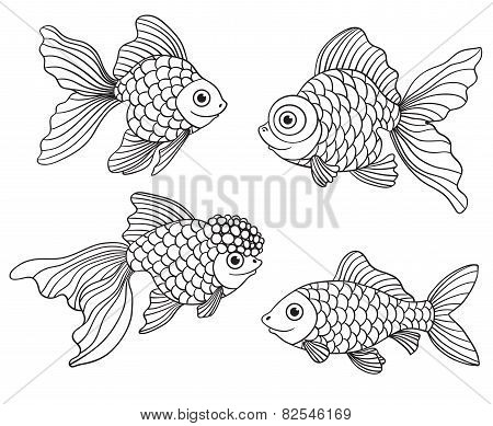 Set Of The Different Linear Goldfishes