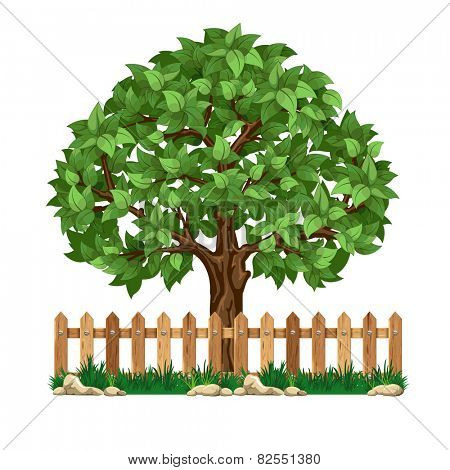 Fruit tree behind the wooden fence