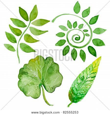 Set Of Vector Four Watercolor Leaves On White Background