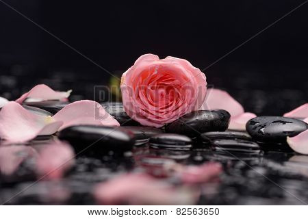 Orange rose with petals with therapy stones