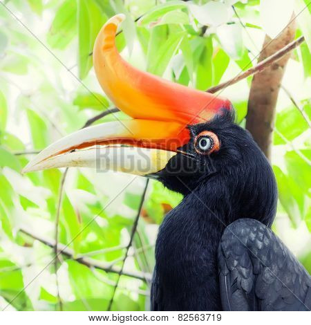 Closup portrait of a hornbill