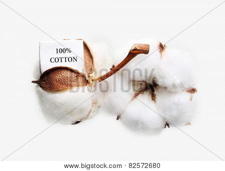 Cotton plant flower with tag label on white background