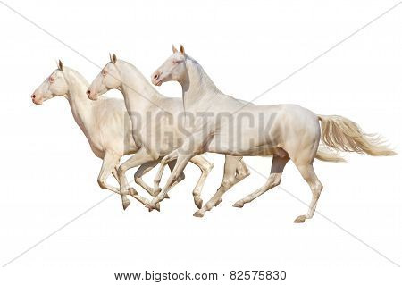 Group horse isolated on white