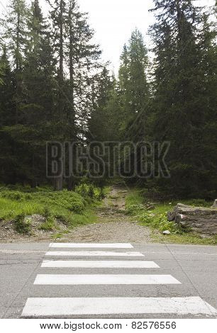 Zebra Crossing And The Mountain Path Through Nature