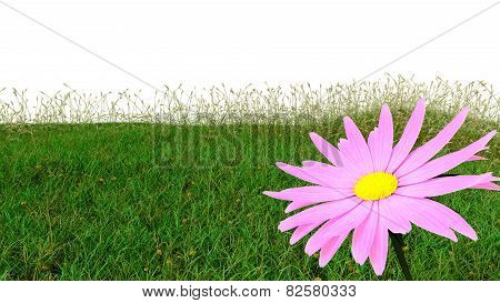 spring background with grass and aster isolated on white