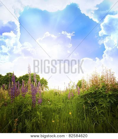 Beautiful spring landscape  with flowers