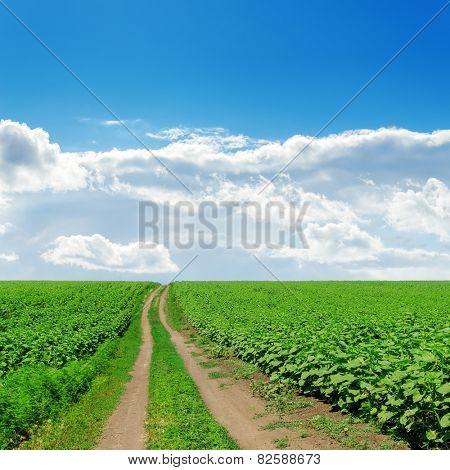 country road in green fields with sunflowers under cloudy sky