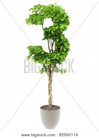 Plant Number Thtee