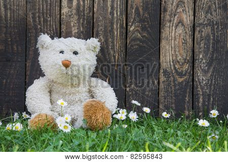 Cute teddy bear sitting alone in the green with old wooden background.