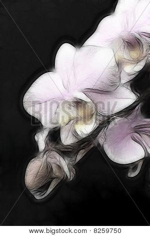 Minature Orchid