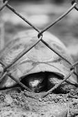 stock photo of tortoise  - Tortoise trapped in a cage and tortoise crawling - JPG