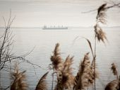 foto of sea oats  - The silhouette of a cargo ship on the Chesapeake Bay with sea oats growing along the shore in the foreground - JPG