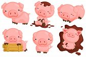 picture of pig  - a cute pigs with many many poses - JPG