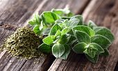 picture of oregano  - Oregano spices - JPG