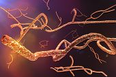 stock photo of microscopic  - Microscopic Ebola Virus EHF Scientific View 3D render - JPG