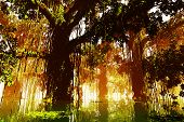 foto of mystique  - Mysterious Deep Jungle in the Sunset - JPG