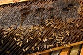 stock photo of beehive  - A close up view of working bees in a beehive producing honey on honey cells - JPG