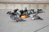 image of pigeon  - Pigeons gather around and eat a sourdough bread bowl they find on a sidewalk in San Francisco - JPG