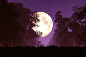 pic of moonlight  - Mysterious Deep Forest at Night in the Moonlight Romantic 3D Artwork - JPG