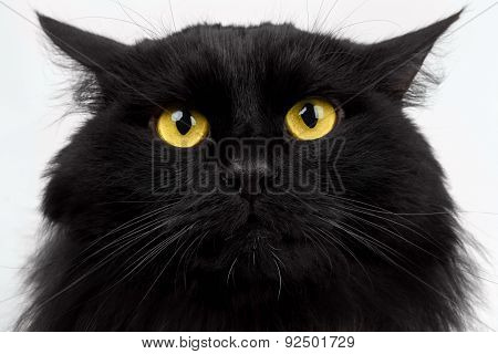 Close-up Black Cat With Yellow Eyes