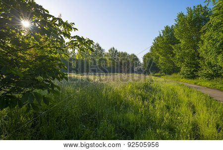 Field with trees and dewy grass at dawn in spring