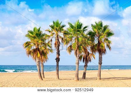 Palm Trees Grow On Empty Sandy Beach