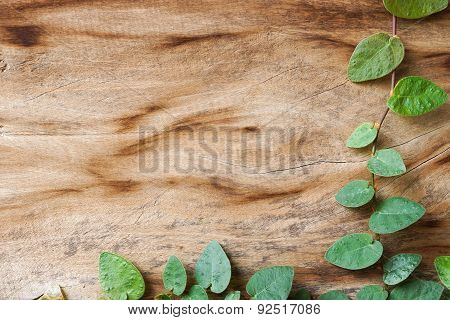 wood background with creeper