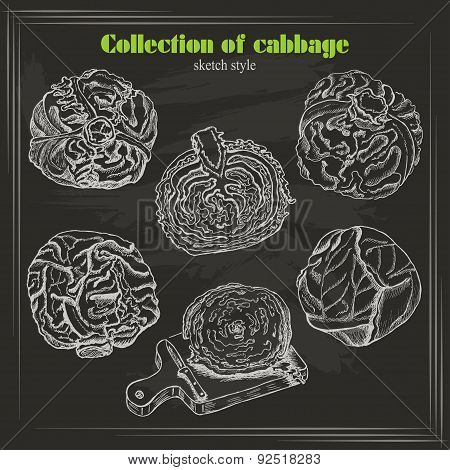 Vector Collection Of Cabbage In Sketch Style On Dark Background