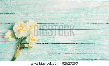 Background With Fresh Daffodils