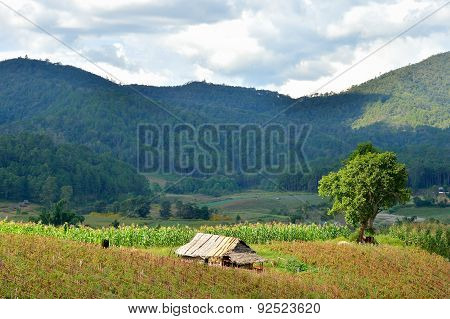 Farmer Hut In Country Of Thailand