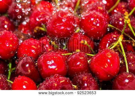 Background With Close Up Of Ripe Cherries And Freezed Water Drops