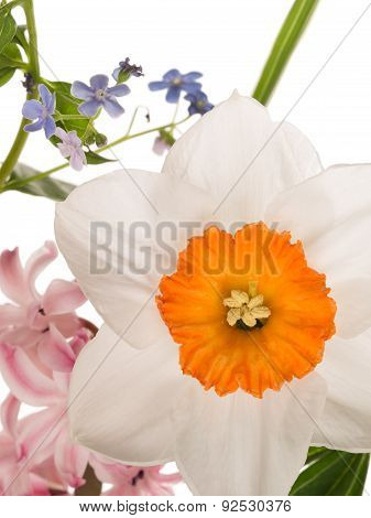 Beautiful Narcissus And Spring Bright Bouquet