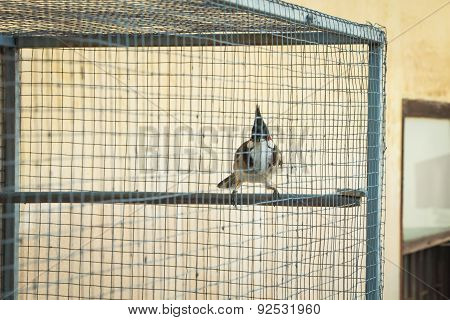 Bird In Th Cage