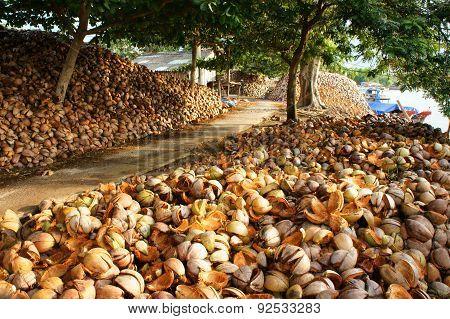 Landscape, Coconut, Travel,  Mekong Delta