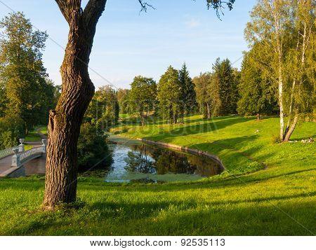 Summer Evening In Park Landscape