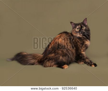 Tortoiseshell Cat Lies On Green