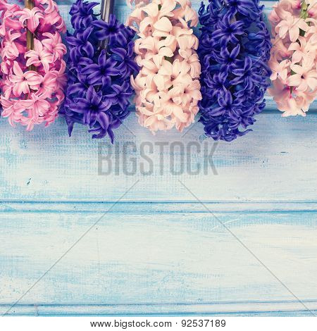 Border From  Fresh Hyacinths