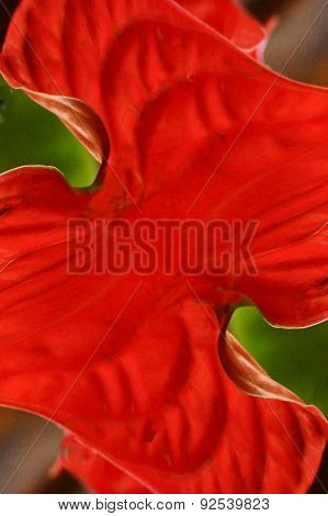 Red Petals Abstract