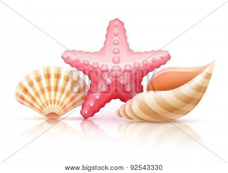 Set of summer sea shells and starfish. Eps10 vector illustration. Isolated on white background