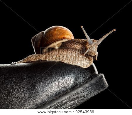 Slow Snail On Boot Toe