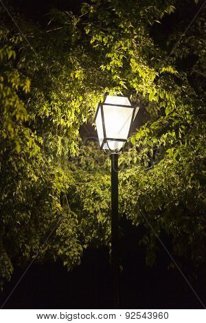 Night Lamp Surrounded By Trees