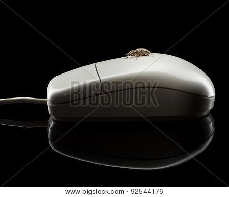 Bug On Computer Mouse