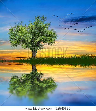 the tree Lake