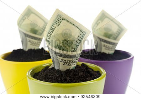 Growing money in colorful flowerpots isolated on white