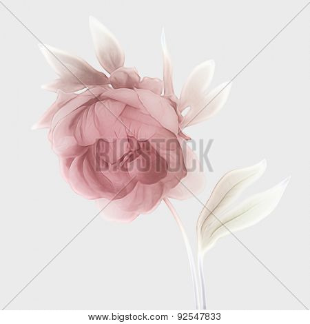 art vintage watercolor blurred floral pattern with pink purple peony isolated on white background with space for text