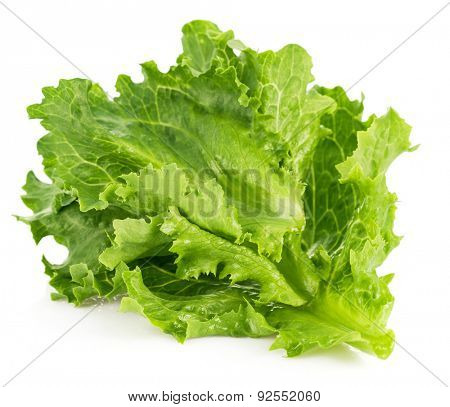 Leaf fresh lettuce. Isolated on white background