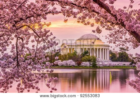 Washington, DC at the Tidal Basin and Jefferson Memorial during the spring cherry blossom season.